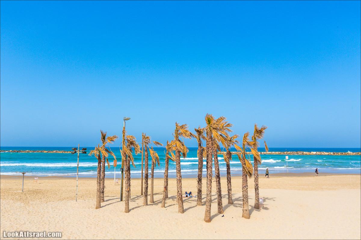 LookAtIsrael.com - Набережная Тель Авива с пальмами | Palms at Tel Aviv beach