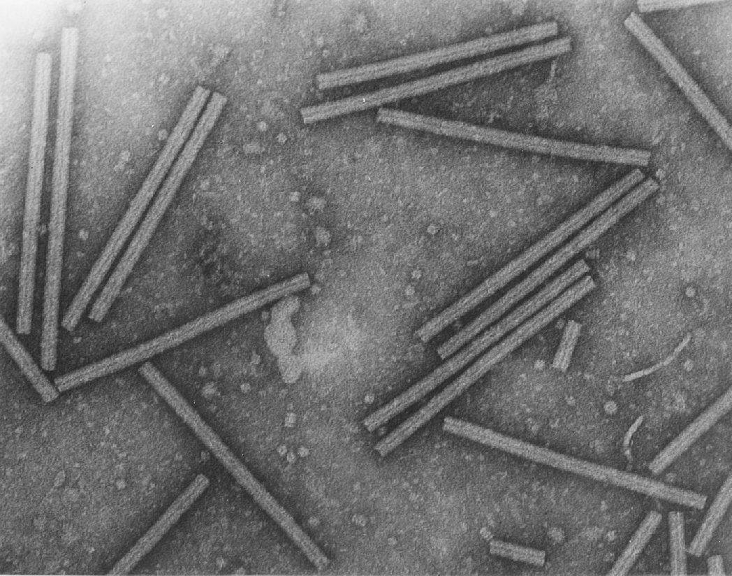 Cfb Bloggers Caracteristicas Gerais Dos Virus