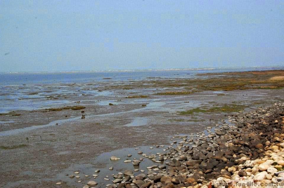 台中海線景點,薦高美濕地