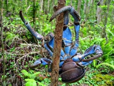опасность в джунглях