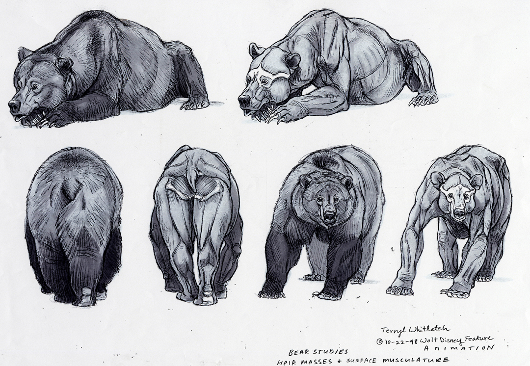 Anatomy Muscle Bear Grizzly