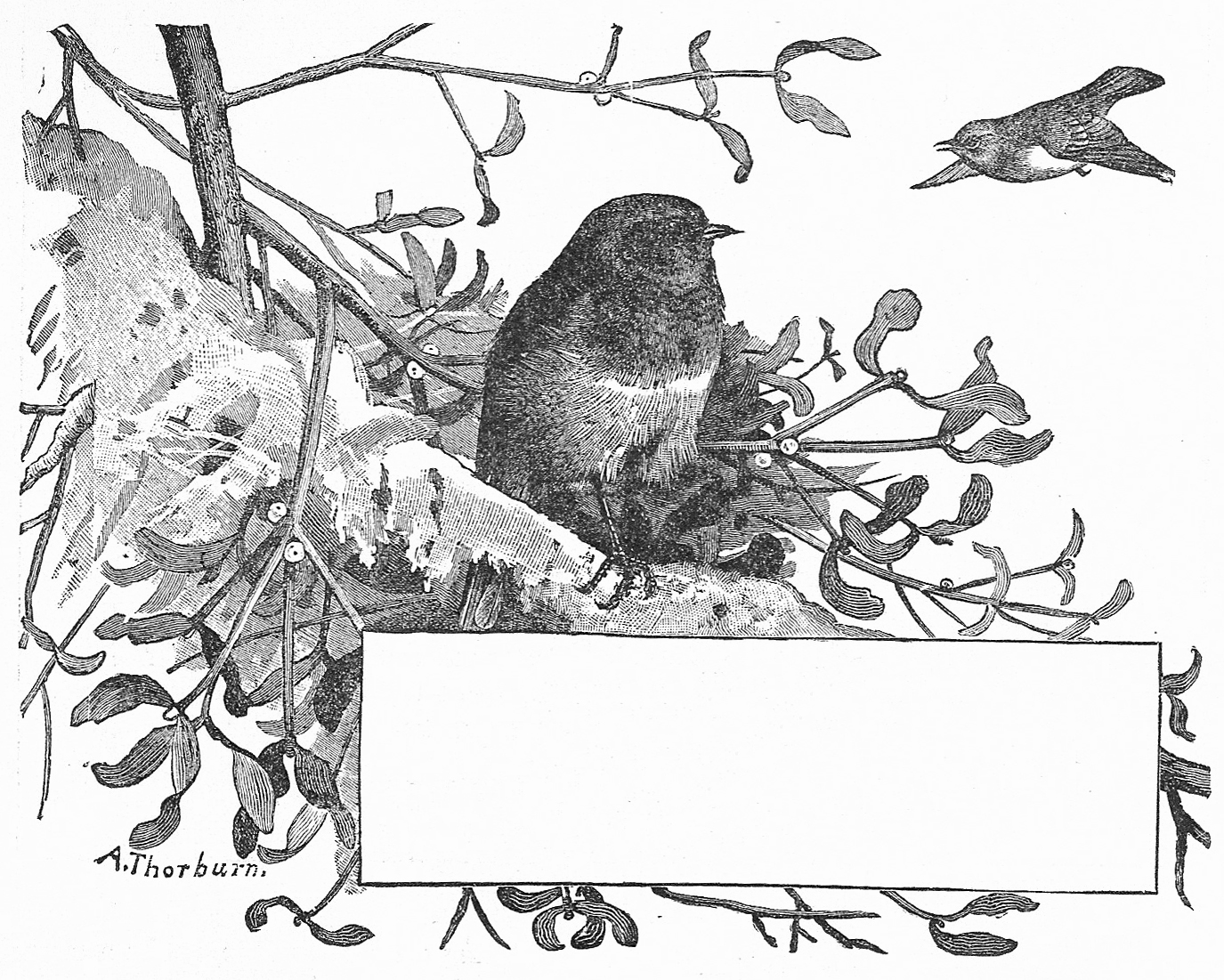 Catnipstudiocollage Free Vintage Clip Art