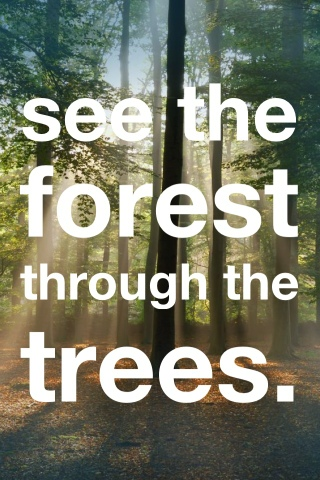 Image result for forest through the trees