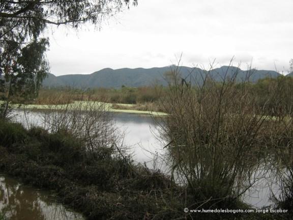 Humedal La Conejera, zona de reserva