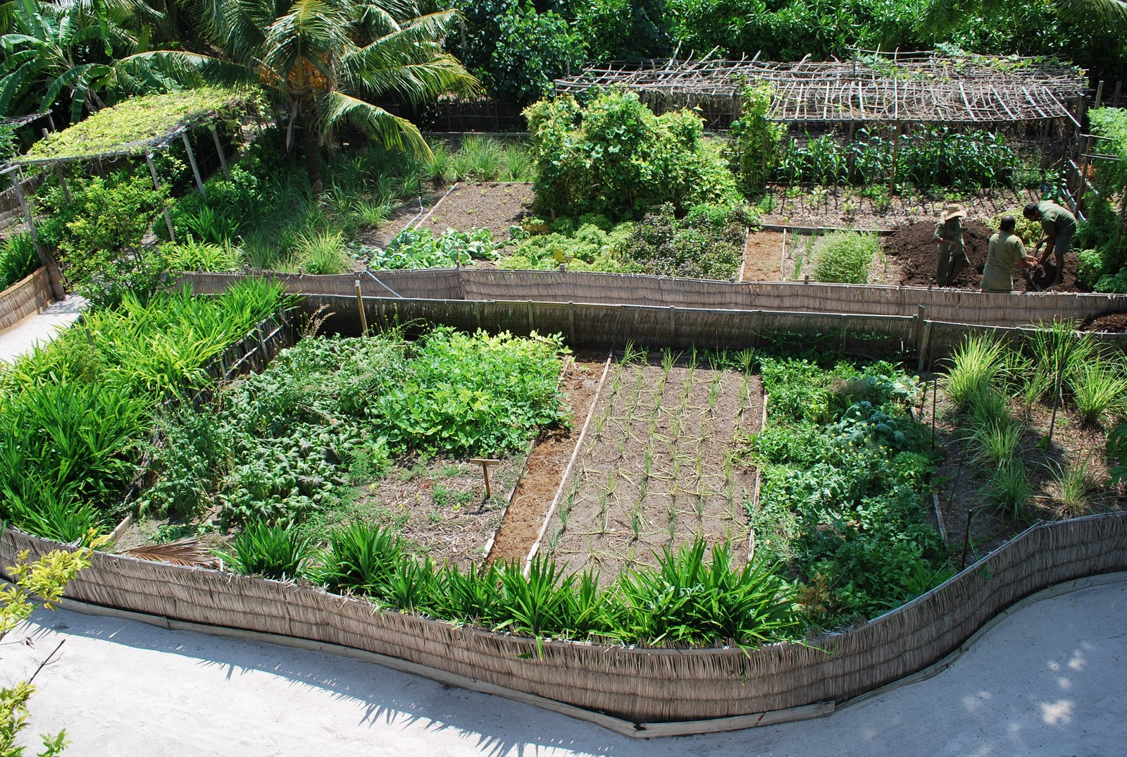 "Permaculture Maldives: ""Fresh In The Garden"" on Backyard Permaculture Design id=72328"