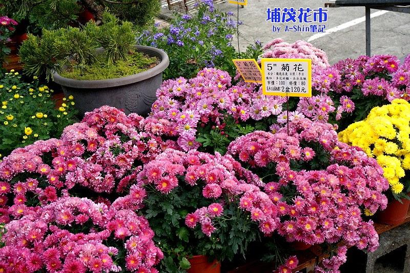 埔茂花市|歡迎來到幸福花園埔茂花市,讓阿新帶著大家逛逛吧。