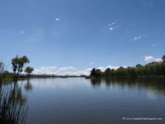 Humedal La Florida