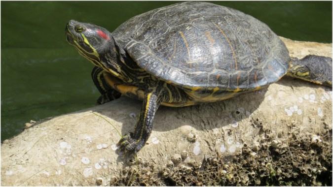Turtle enjoying the sun