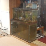 I like making fish tanks overflow it appears