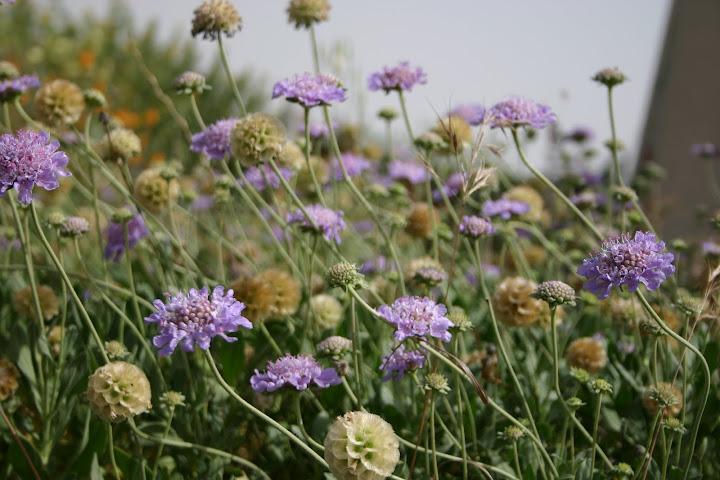 תגית כרתית, פרחים והלקט זרעים, היופי הוא לא רק לעיני המאביקים.