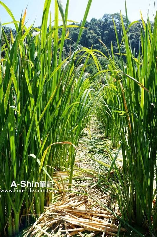桃米休閒農業區16