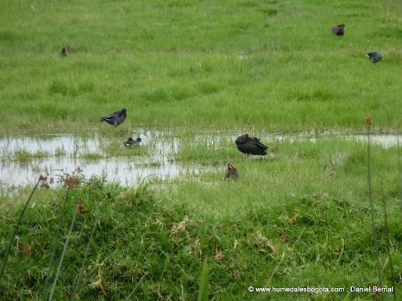 Aves en el meandro del Say