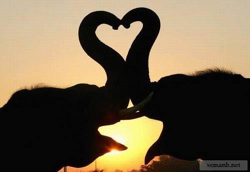 Animales cariñosos: Elefantes