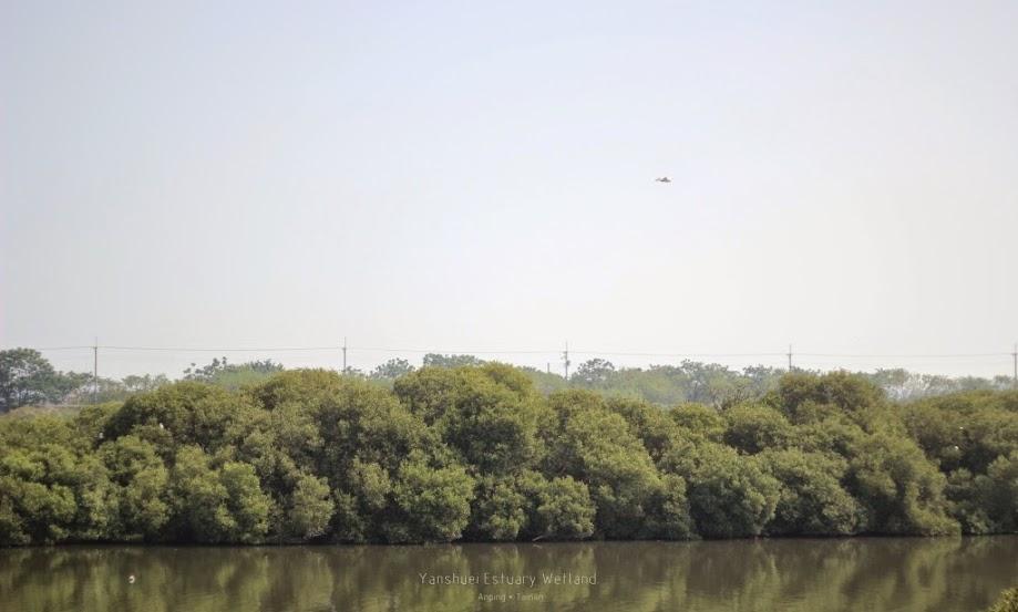 台南安平鹽水溪河口溼地-1