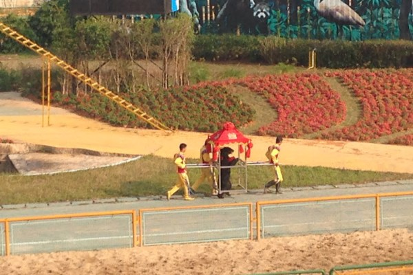 Shenzhen Zoo