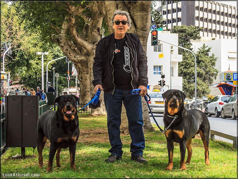 Собаки и их люди. Часть 2