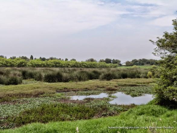 Humedal Tibabuyes o Juan Amarillo
