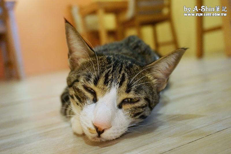 這裡有貓輕食屋7