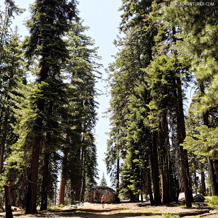 Lakes Trail Sequoia National Park (15 Best Hikes in the US).