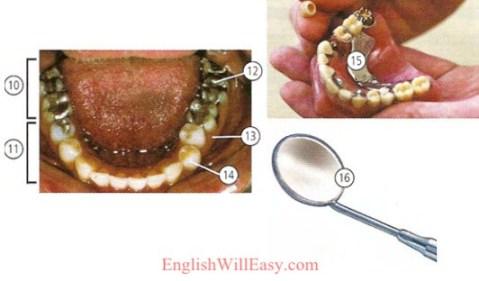 Soins dentaires et oculaires-santé-dictionnaire photo en ligne