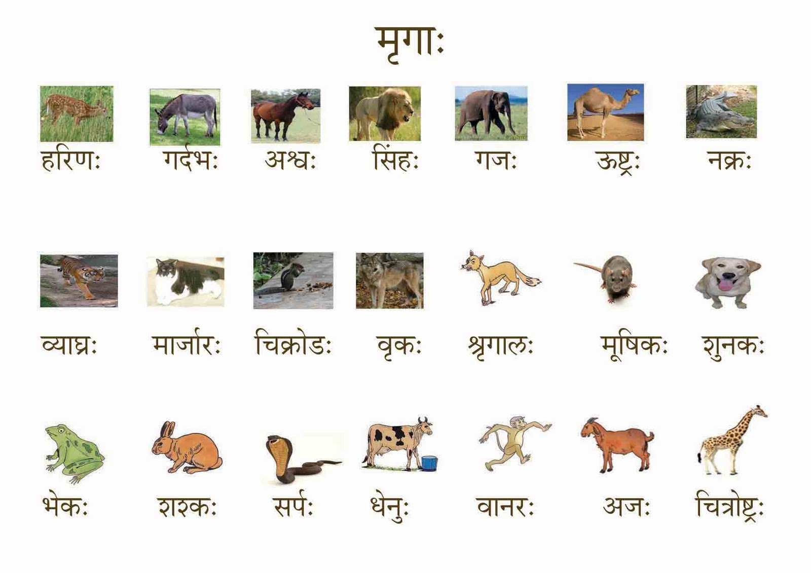Birds Images With Name In Sanskrit