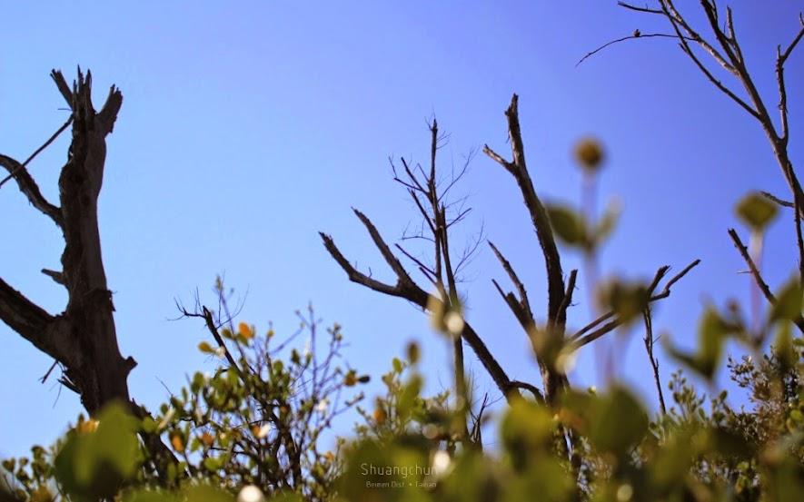 台南北門景點,雙春濱海遊憩區-9