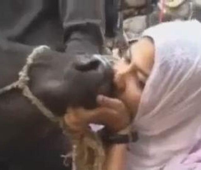 Pakistani Girl Kissing Cow For