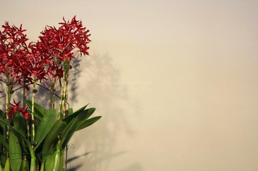 2015 台灣國際蘭花展地址-1