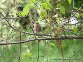 Aves del humedal Mamá Dominga
