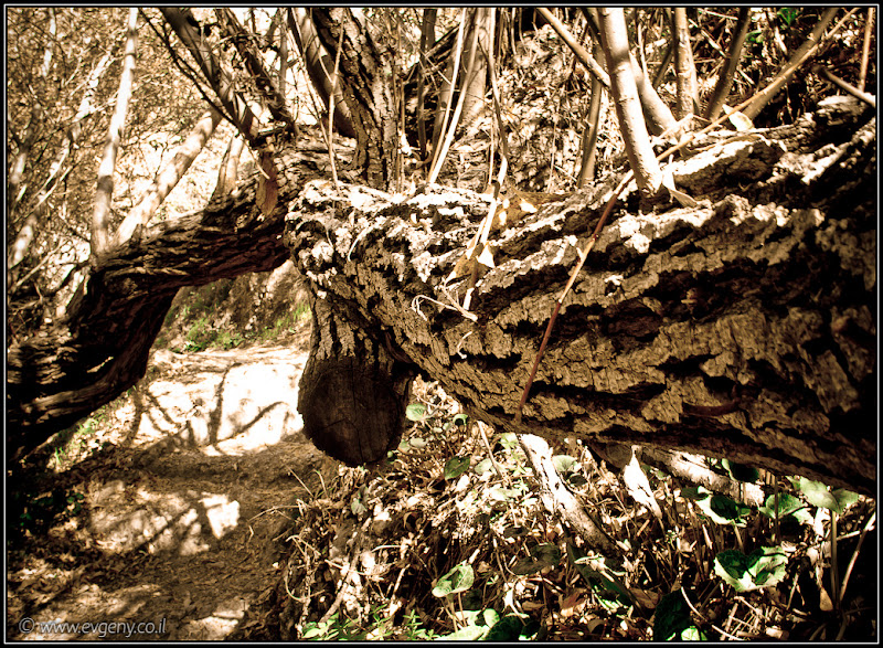 Одно фото / Израиль, Парк Нахаль Ийон (Аюн)