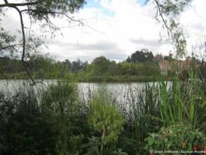 Humedal del Club Los Lagartos