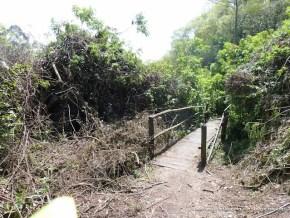 Tala de árboles, Humedal La Conejera