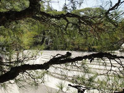 View of the zen garden through the tree