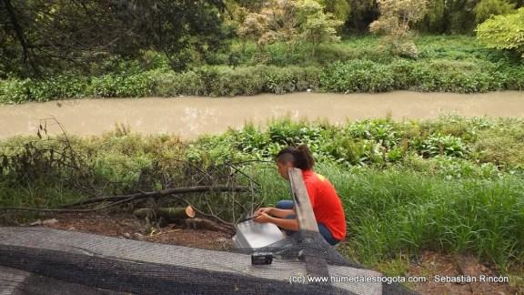 Momento de la liberación  del búho listado en el humedal de Córdoba