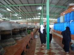 rose boilers