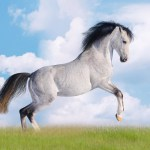 Iphone White Horse Wallpaper Hd White Wallpaper