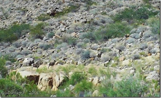 Mt Sheep along Colorado River trip Grand Canyon National Park Arizona