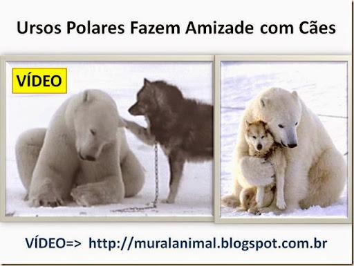 Ursos Polares Fazem Amizade com Cães