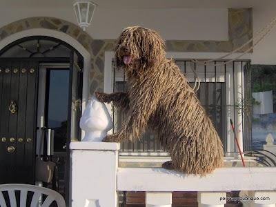 fotos para el mundo del perro 008.jpg