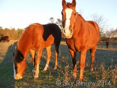Sky Review, Horses at Sunset
