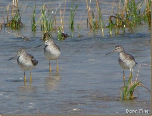Birding south beach_091
