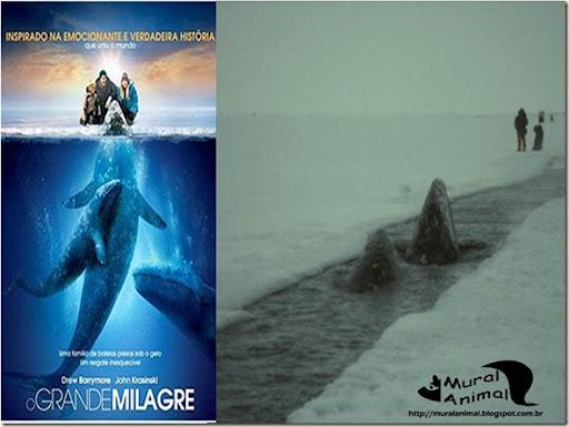 milagre-baleias (12)