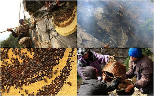 honey-cacciatori-nepal