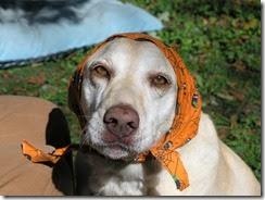 Orla in her Halloween kercheif
