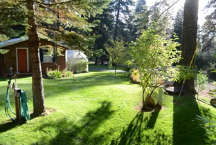 the lawns are still nice and green in the morning light