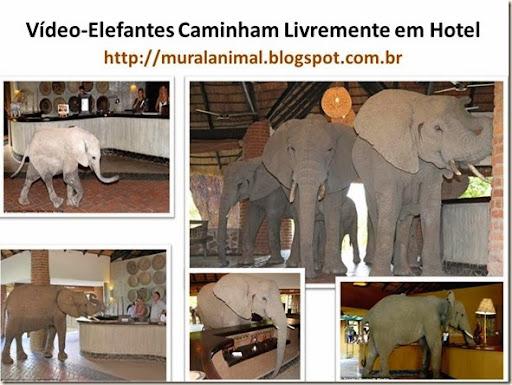 Vídeo-Elefantes Caminham Livremente em Hotel