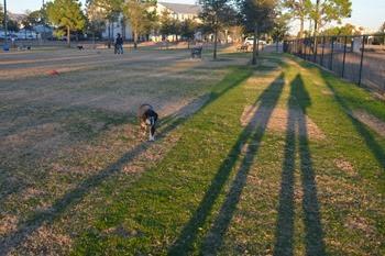 Abby at the Destin dog park