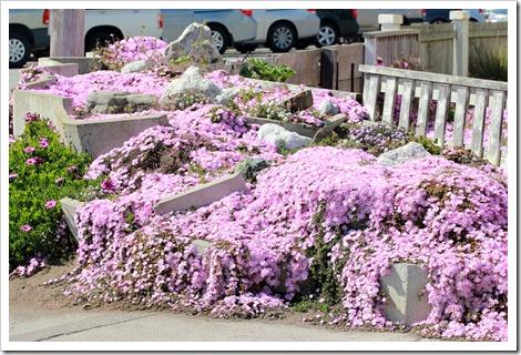 Эта цветочная комозицая на углу улицы просто меня не отпускала, я бы так там и осталась - вдыхать аромат и наслаждаться красотой.