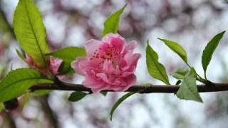 春節惱人的答客問