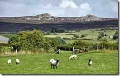 Sheep and Stiperstones